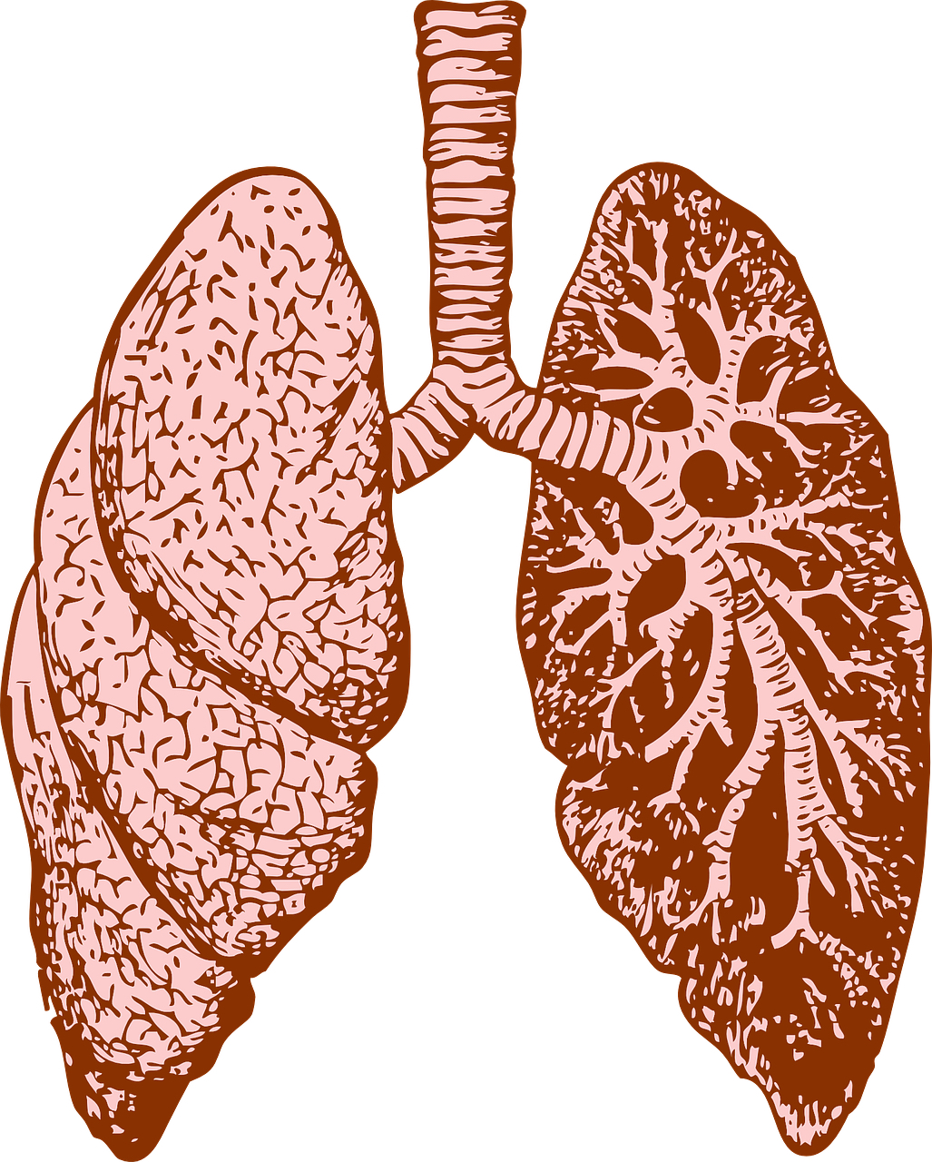 lungs and breath