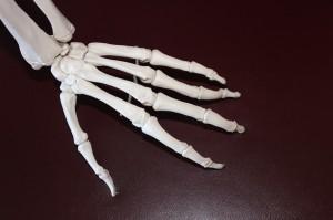 bones of hand