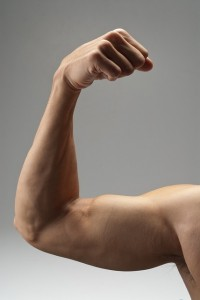 muscle connections